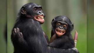The 17-year-old male bonobo 'Manono' and 4-year-old male 'Pole' hug each other at Lola ya Bonobo Sanctuary in the Democratic Republic of Congo in 2010.