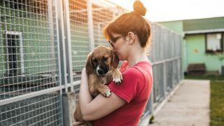 adopting vs buying a dog