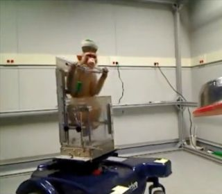 monkey uses mind-controlled wheelchair