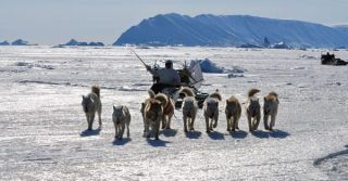 inuit-sled-successful-hunt-110107-02