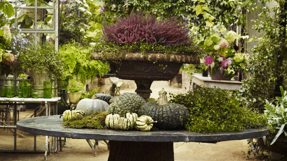 Fall planter ideas – 11 tips for vibrant autumnal containers