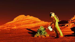 Gardening on Mars
