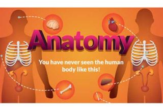 3D Anatomy App Offers Guided Tour of Body