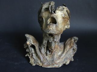 Mummified head anatomical specimen