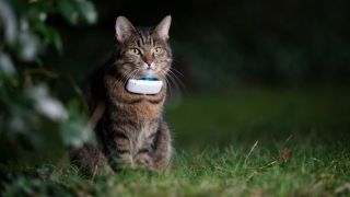 Cat wearing one of the best pet trackers