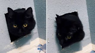 cat was found safe inside a wall