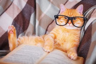 An orange cat wearing glasses and appearing to read a book.