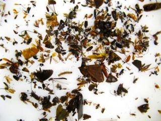 Crushed Up Insects - Insect Soup