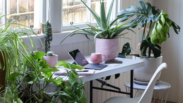 Do house plants clean the air in a home office
