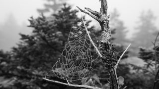 Arachnophobia is the fear of spiders. This black and white image of a dewy spider web on a tree branch would not be attractive to someone with arachnophobia.