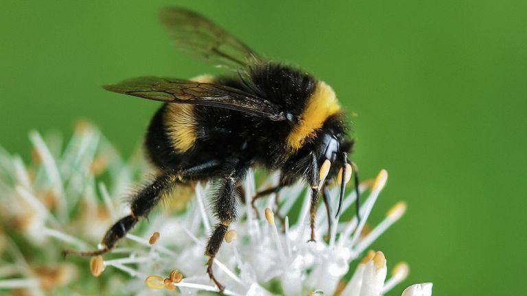 Expert bee-friendly garden tips