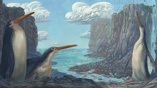 The giant penguin, Kairuku waewaeroa.