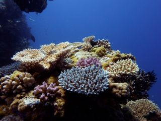 Warming ocean water has devastating effects on coral reefs, causing coral to bleach by expelling their symbiotic algae.