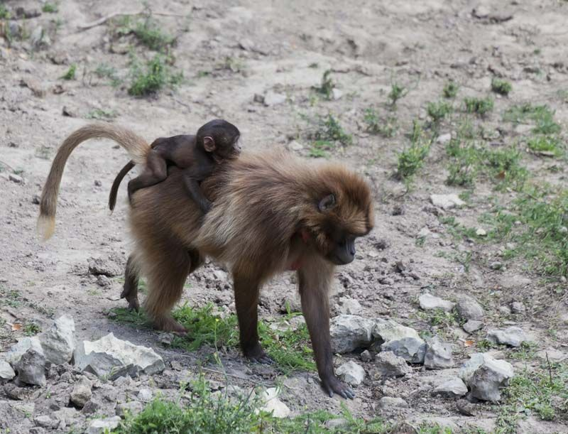 Monkeys: Facts, Types & Pictures | Live Science