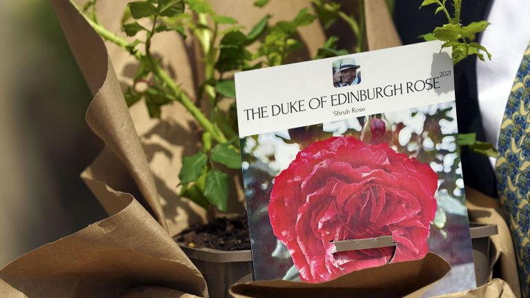 Duke of Edinburgh rose