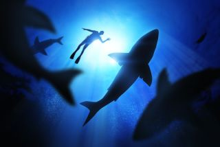 Sharks with Diver