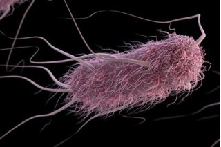 A computer-generated image of E. coli.