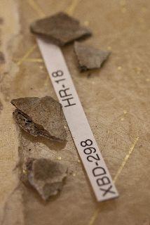 Cremated bone