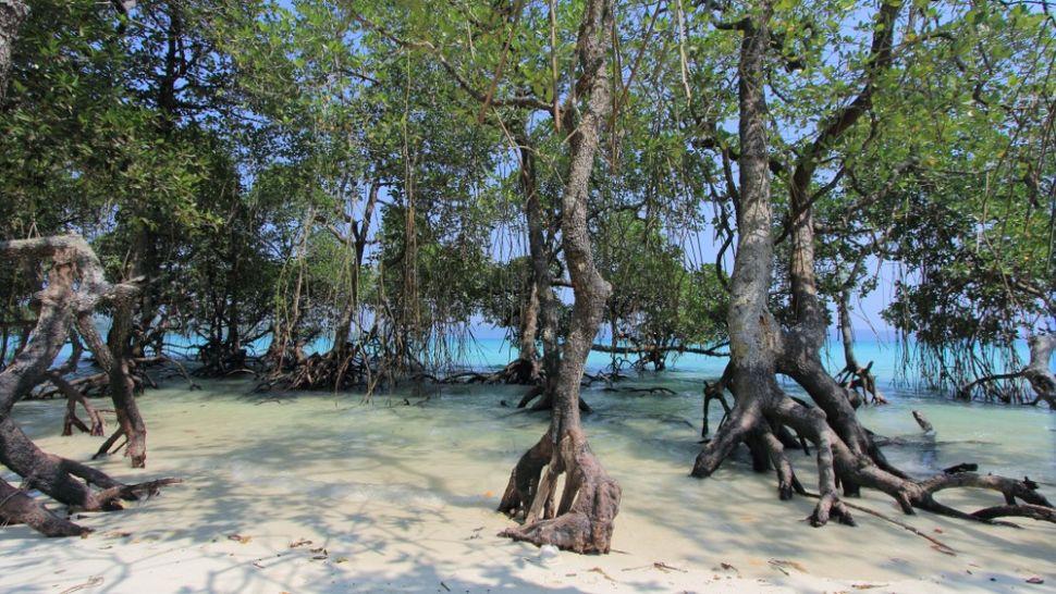 inland mangroves