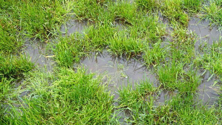 Waterlogging in a garden