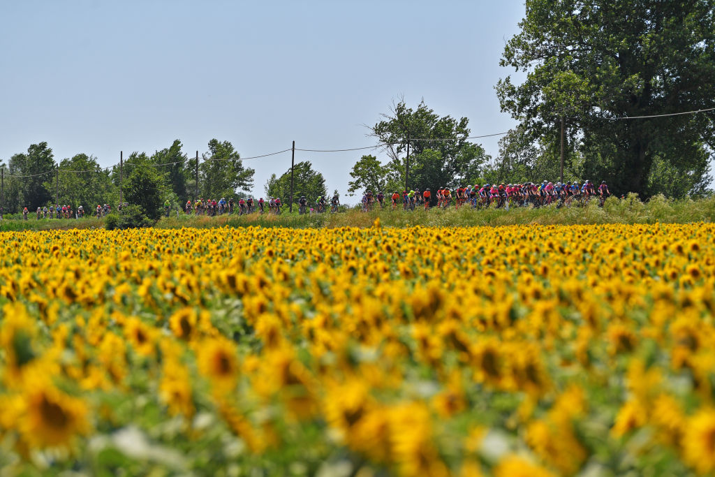 MONTE MATAJUR ITALY JULY 10 The Peloton passing through a Sunflowers field during the 32nd Giro dItalia Internazionale Femminile 2021 Stage 9 a 1226km stage from FelettoUmberto to Monte Matajur 1267m GiroDonne UCIWWT on July 10 2021 in Monte Matajur Italy Photo by Luc ClaessenGetty Images