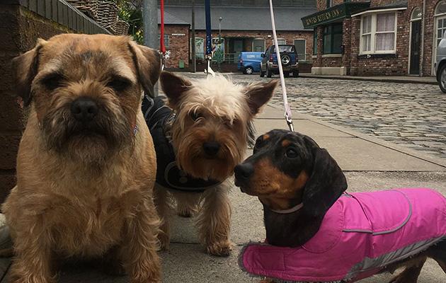 It's puppy love as Coronation Street celebrates National ...