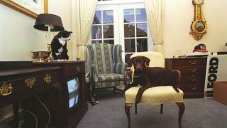 Cats in the White House: Buddy The Dog And Socks The Cat in the Oval Office