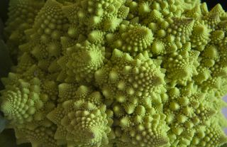 Spiral broccoli