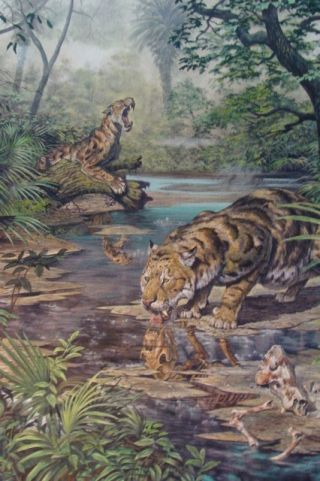 illustration shows a newly discovered type of saber-toothed cat at a pool of water