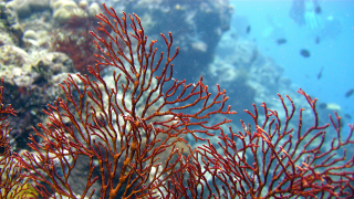 Synthetic coral could suck pollution out of the sea