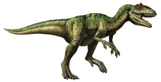 Allosaurus: Facts About the 'Different Lizard' | Live Science