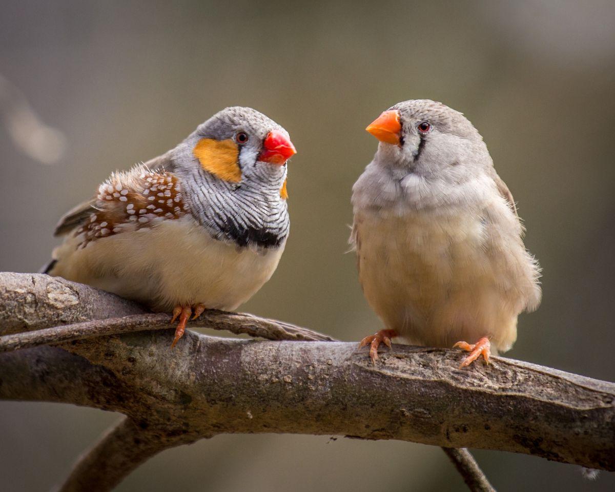 Scientists Implant False Memories into Bird Brains