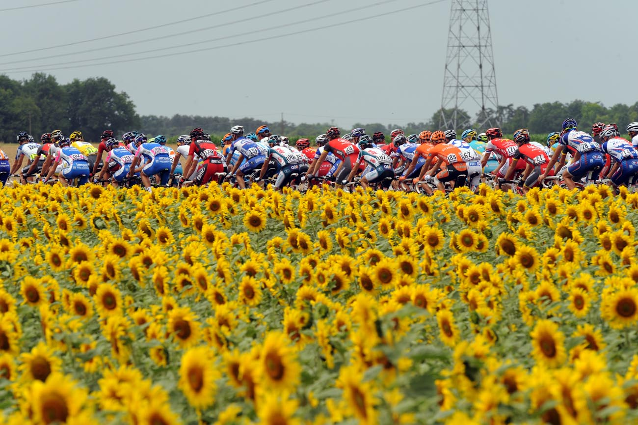 Sunflowers, Tour de France 2010, stage 6