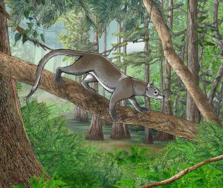 Small carnivore in a tree