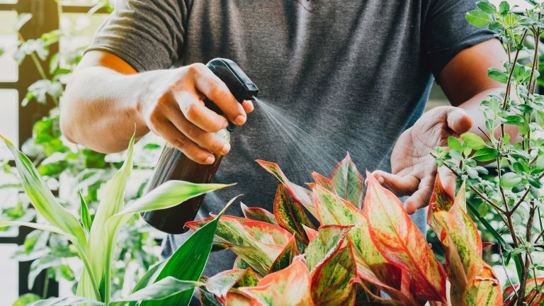 Misting plants