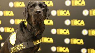Sota the sniffer dog