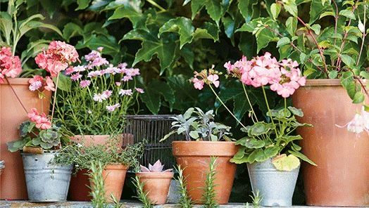 container planting on a balcony