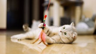 Cat playing with the best indoor cat toy