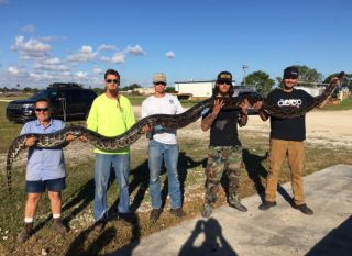 Python hunter Jason Leon (far right) caught a more than 17-foot-long python near Big Cypress National Preserve in South Florida.