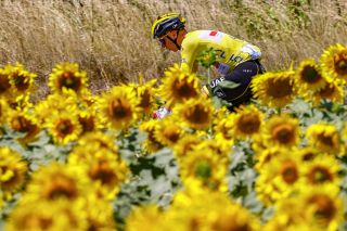 Tour de France leader Tadej Pogacar rides through the sunflowers on stage 13