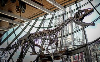 Dinosaur Sells for Over $2 Million at Auction  Why