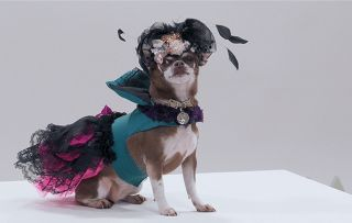 What's on telly tonight? Our pick of the best shows on Friday 5th October The Big Audition - shows chihuahua Queenie Woof Woof