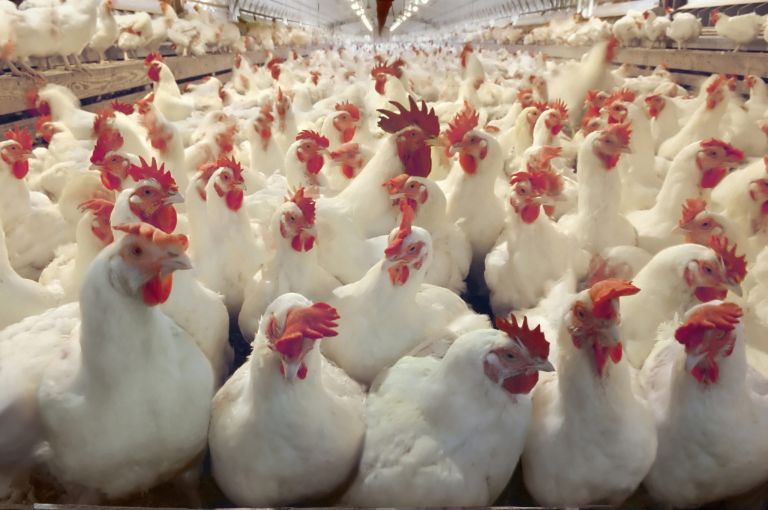 Is chlorine-washed chicken safe?
