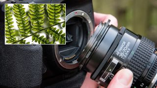 Home photography ideas: Shoot macro with no macro lens, using a reversing ring