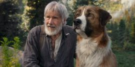 Harrison Ford's Latest Airplane Incident Has Reached A Conclusion