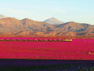 atacama blooms and a train