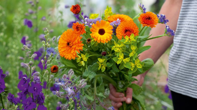 How to grow a cutting garden: grow your own fresh flowers