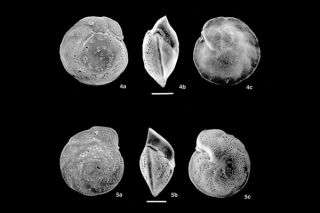 NSF, microfossils, forams, ACC, Arctic Circumpolar Current, fossils