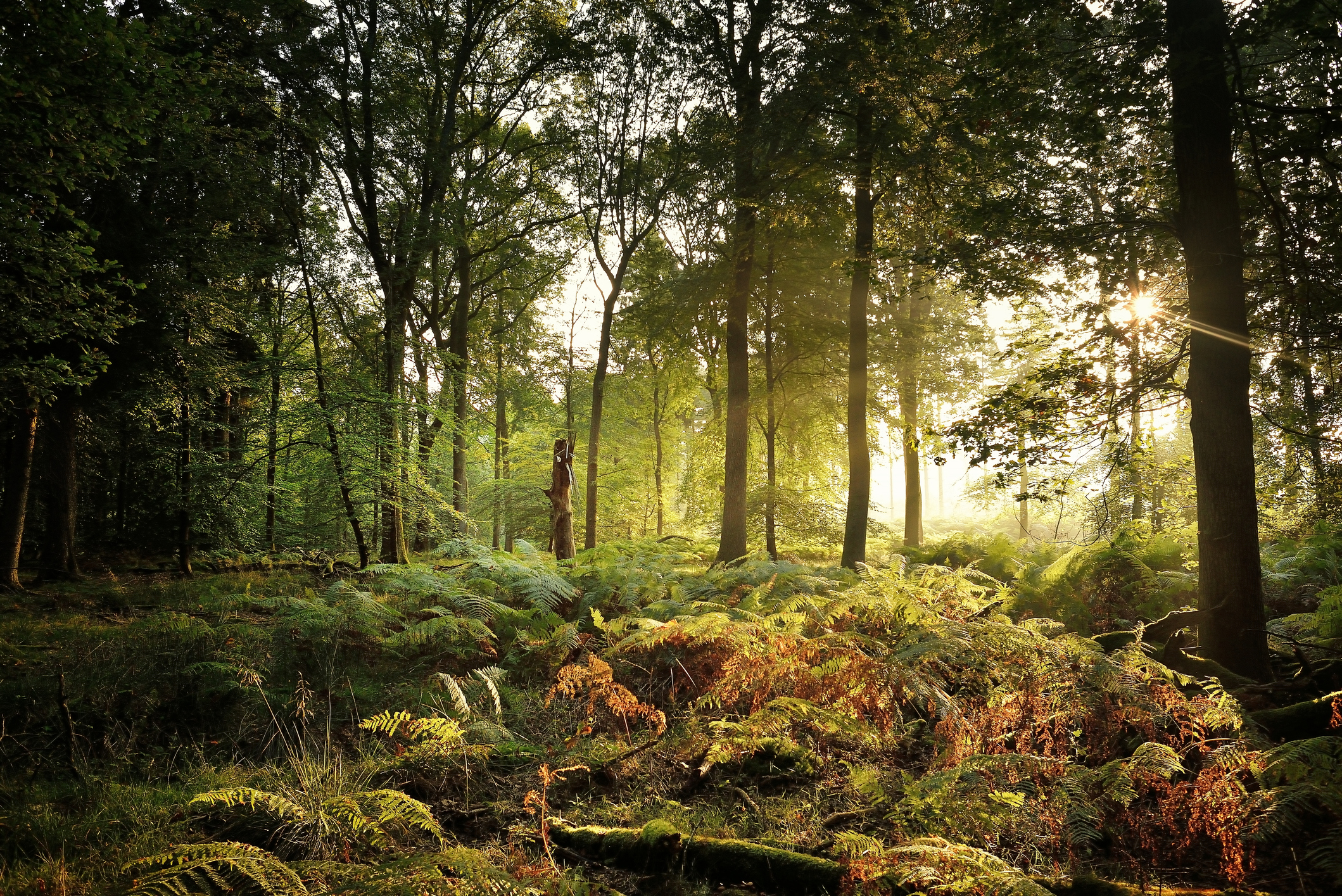 These beautiful woodland walks are the perfect way to spend an autumn weekend