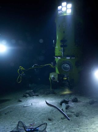 james cameron deep sea news, mariana trench news, deepsea challenger images, deep-sea life, seafloor animals, deep sea news